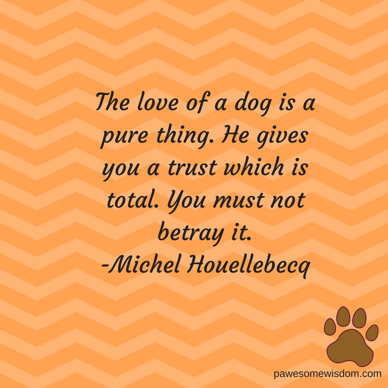 the love of a dog